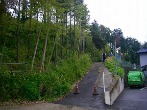 藤沢市花の木:伐採施工前