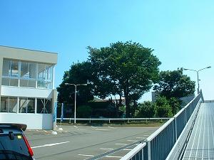 横浜市戸塚区:伐採施工前